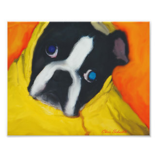 Boston Terrier in a yellow rain coat Photo