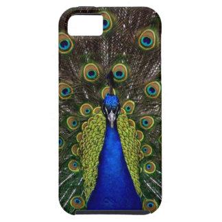 Bright girly pretty peacock bird nature animal tough iPhone 5 case