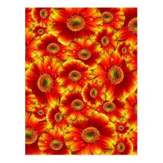 Bright Orange Flowers Postcard