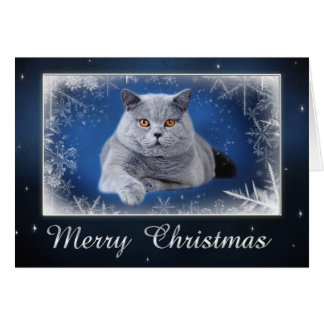 British shorthair Christmas card