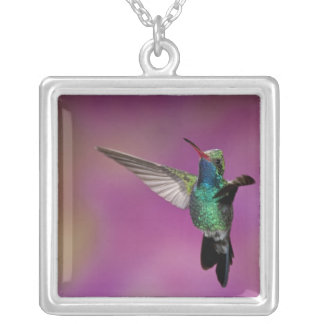 Broad-Billed Hummingbird, Cynanthus Square Pendant Necklace