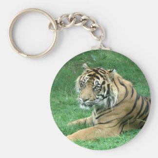 Brown Fur Black Stripes Tiger Sitting Keyring Basic Round Button Key Ring