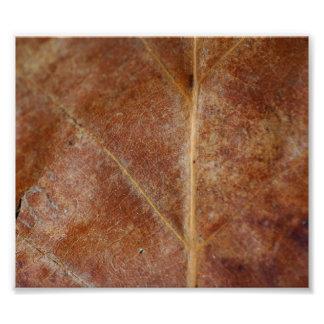 Brown Leaf Leaves Tree Photo Art
