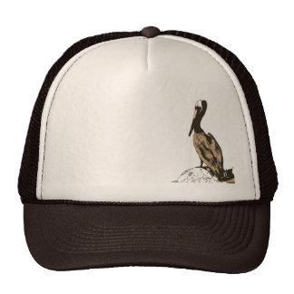 Brown Pelican Birds Wildlife Animals Cap