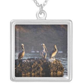 Brown pelicans on rock in Puerto Escondido near Square Pendant Necklace