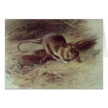 Brown Rat  1918 Greeting Card
