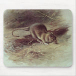 Brown Rat  1918 Mouse Pad