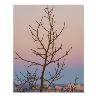 Bryce Canyon, Utah. Bare tree in front of sunset Poster