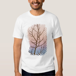 Bryce Canyon, Utah. Bare tree in front of sunset Shirt