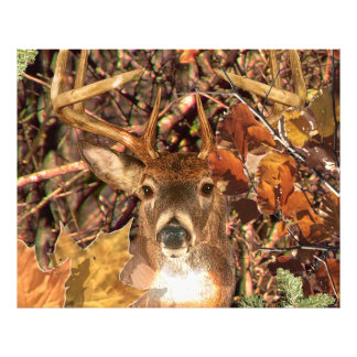 Buck in Camouflage White Tail Deer Photograph