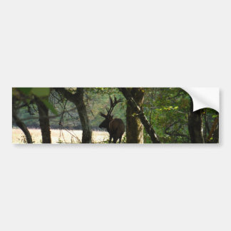 Bull Elk at wood edge Camouflage Bumper Sticker