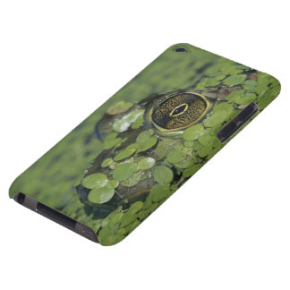 Bullfrog, Rana catesbeiana, adult in duckweed iPod Case-Mate Case