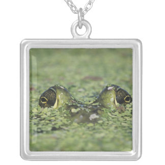 Bullfrog, Rana catesbeiana, adult in duckweed Square Pendant Necklace