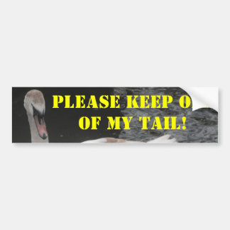 Bumper Sticker Baby Swan Swimming
