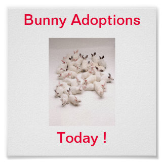Bunny Adoption Today Sign Poster