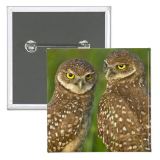 Burrowing owls are a popular site on Marco 2 15 Cm Square Badge