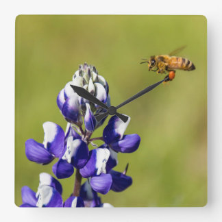 Busy Bee Contemplating a Wild Lupine Flower Clocks