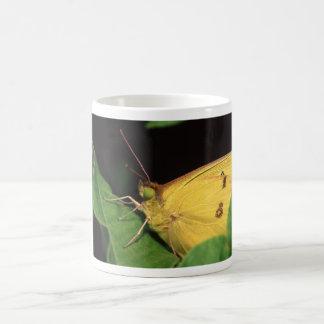 butterfly basic white mug