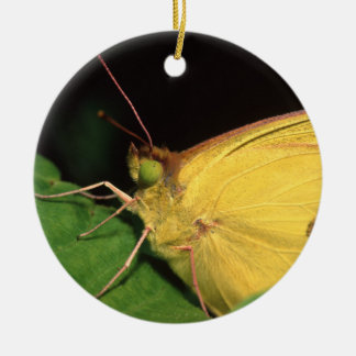 butterfly round ceramic decoration