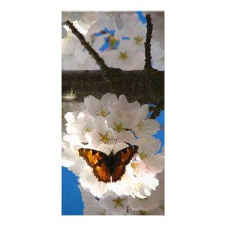 Butterfly Sakura Photo Greeting Card