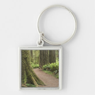 CA, Jedediah Smith State Park, Simpson-Reed Silver-Colored Square Key Ring