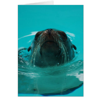 """California Sea Lion"" Greeting Card"