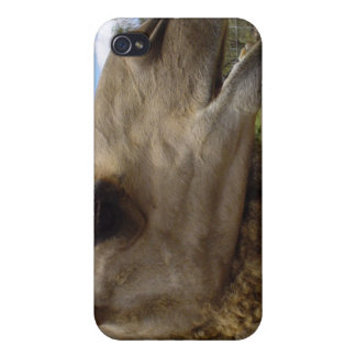 Camel animal desert animal nature funny humor covers for iPhone 4