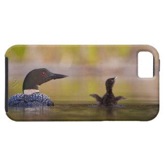 Canada, British Columbia,Common Loon, breeding 3 Tough iPhone 5 Case