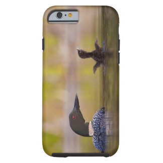 Canada, British Columbia,Common Loon, breeding 3 Tough iPhone 6 Case