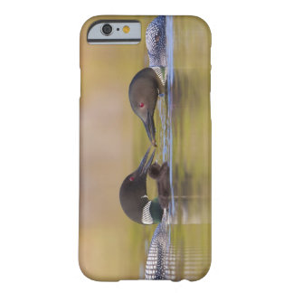 Canada, British Columbia,Common Loon, breeding Barely There iPhone 6 Case