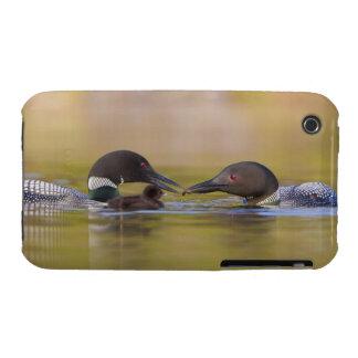 Canada, British Columbia,Common Loon, breeding iPhone 3 Covers