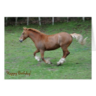 Cantering Welsh cob birthday Greeting Card