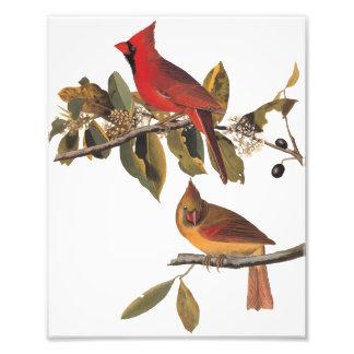 Cardinal Grosbeak Birds Audubon Vintage Art Photo Print
