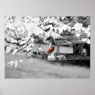 Cardinal Infrared Poster