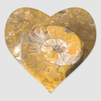 Carved Bowl Made of Fossils in Rock Heart Sticker
