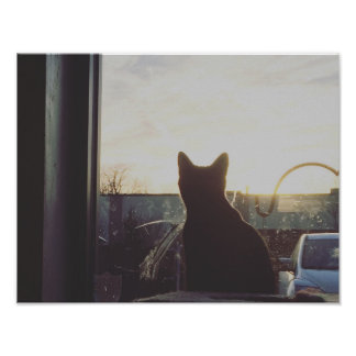 Cat and Sunset Poster