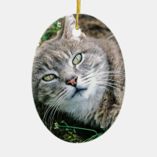 Cat Eyes Ceramic Oval Decoration