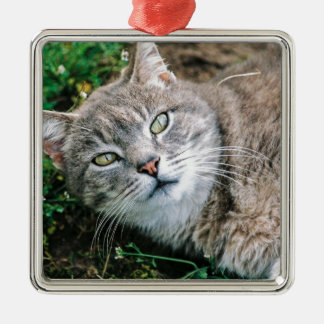 Cat Eyes Silver-Colored Square Decoration