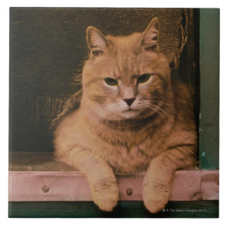 Cat Leans on Windowsill Large Square Tile