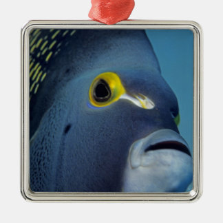 Cayman Islands, French Angelfish Pomacanthus Silver-Colored Square Decoration