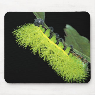 Central America, Panama, Barro Colorado Island. 4 Mouse Pad