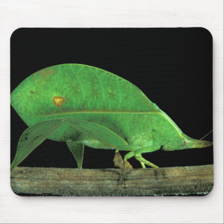 Central America, Panama, Barro Colorado Island. 5 Mouse Pad