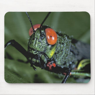 Central America, Panama, Barro Colorado Island. 7 Mouse Pad