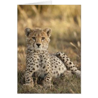 Cheetah, Acinonyx jubatus, cub laying downin Greeting Card
