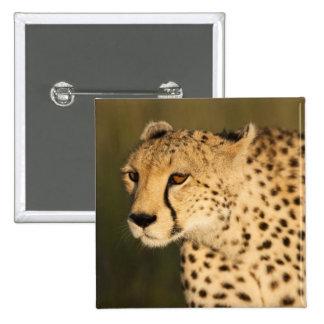Cheetah, Acinonyx jubatus, in the Masai Mara 2 15 Cm Square Badge