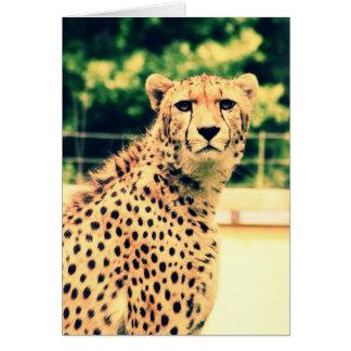 Cheetah glare greeting card