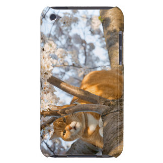 Cherry Blossom Kitty Barely There iPod Cases