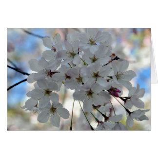 Cherry Blossom Springtime Greeting Card