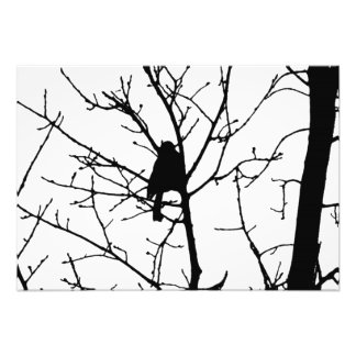 Chickadee Silhouette Love Bird Watching Photo