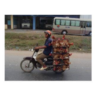 Chickens on Motorbike-Vietnam Postcard
